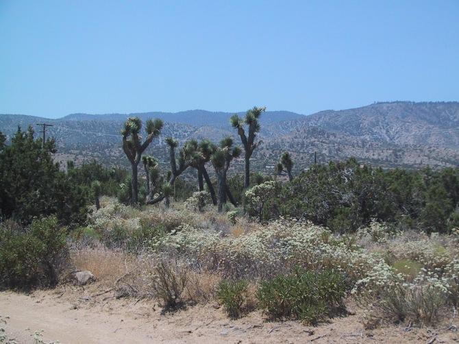 California05 082