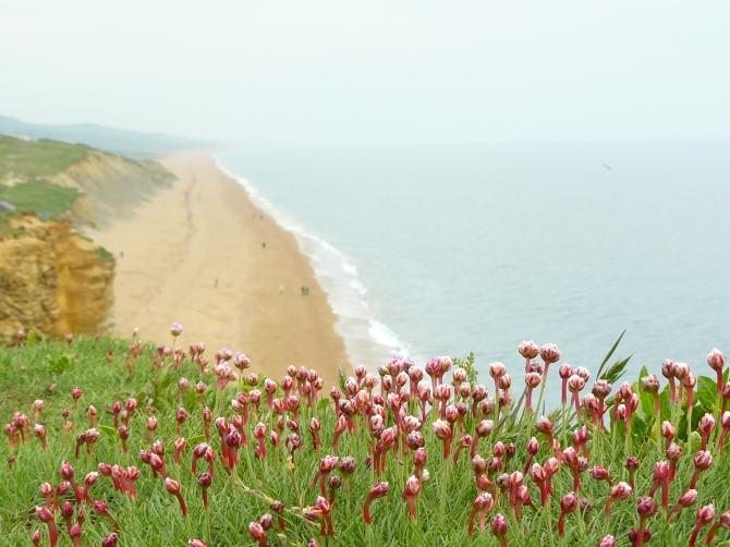 Dorset 107